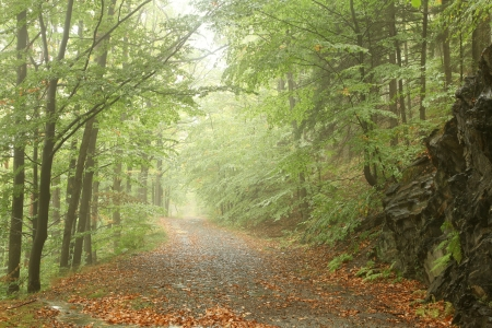 Forest trail surrounded by fresh spring vegetation on a foggy morning