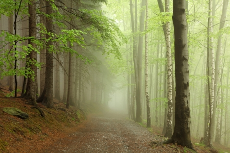 Forest path on the border between coniferous and deciduous trees Stock Photo