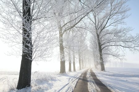 Winter rural road among frosted trees lit by the morning sun photo
