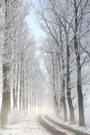 Winter rural road among frosted trees lit by the morning sun Stock Photo - 15183277