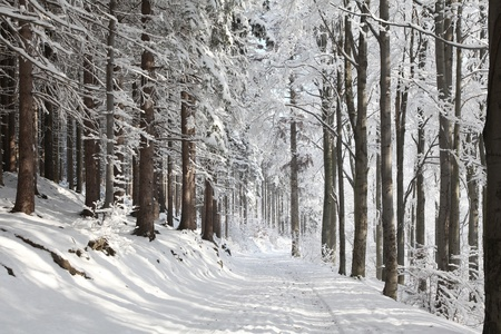 Winter lane among frosted trees lit by the morning sun Stock Photo - 15183243