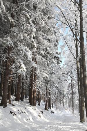 Winter lane tussen de berijpte bomen verlicht door de ochtendzon