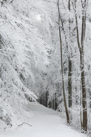 Bospad tussen de berijpte bomen tijdens een sneeuwval