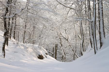 Bospad tussen de bomen bedekt met sneeuw op een zonnige ochtend