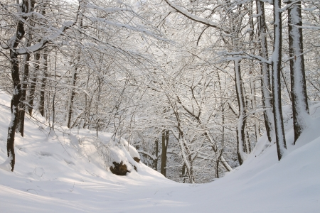Forest path among the trees covered with snow on a sunny morning