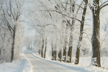 Winter lane among frosted trees backlit by the morning sun Stock Photo - 15183229