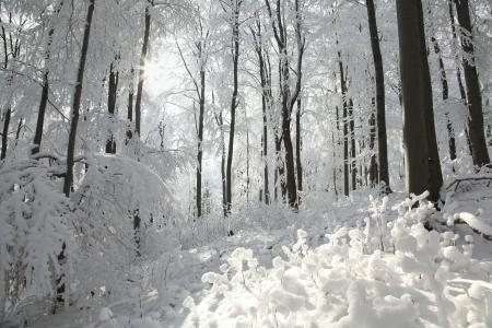 Winter beukenbos op de helling op een ijzige zonnige ochtend
