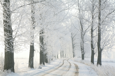 Winter rural road among frosted trees back lit by the morning sun