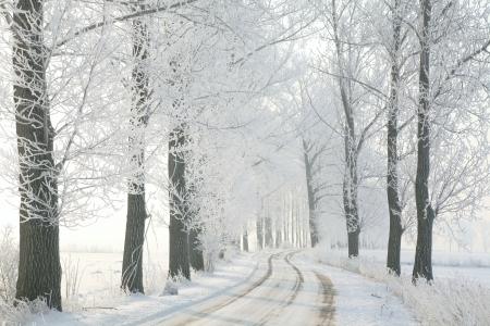 Winter landelijke weg tussen de berijpte bomen terug verlicht door de ochtendzon Stockfoto