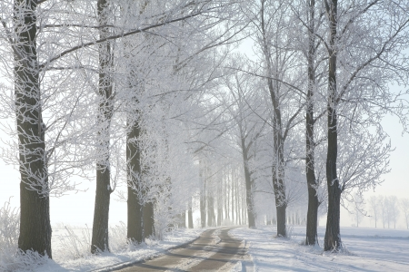 Winter lane among frosted trees illuminated by the morning sun Stock Photo - 15183274