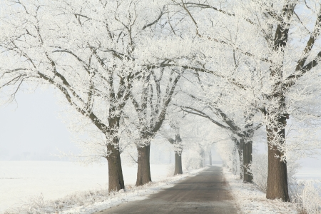 Winter lane among the old oak trees covered with frost