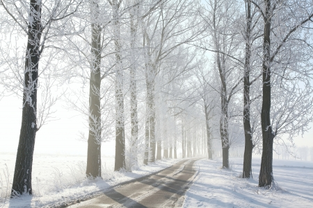 Country road leading among frosted trees on a sunny morning Stock Photo - 15183272