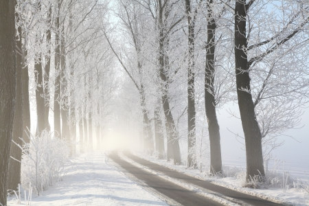 Winter rural road among frosted trees lit by the morning sun