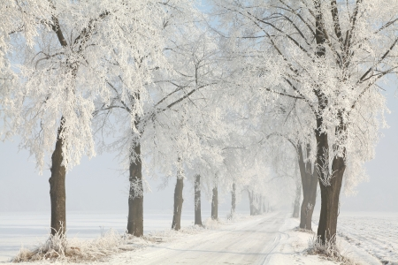 Dirt road among the frosted trees leading into the woods Standard-Bild