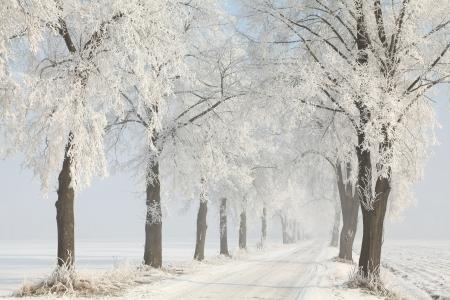 Onverharde weg onder de berijpte bomen leidt naar de bossen Stockfoto