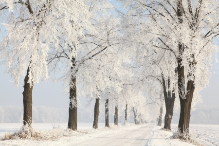 Dirt road among the frosted trees leading into the woods Stock Photo - 15183271