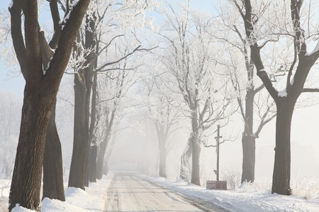 Country road among frosted maple trees on a foggy winter morning Stock Photo - 15183251