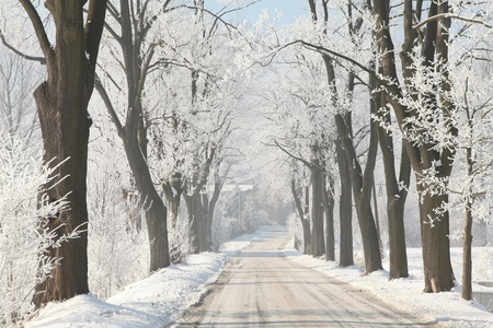 Winter country road among frosted maple trees in the morning photo