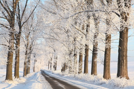 Winter country road among frosted trees lit by the rising sun photo