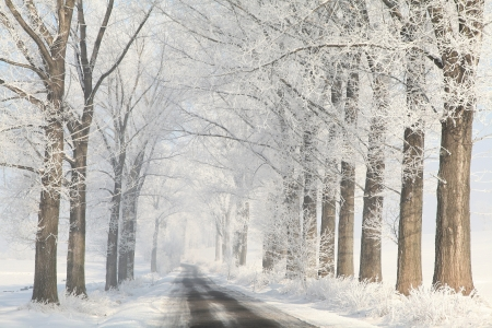 Winter lane between the trees covered with frost on a cloudless morning Stock Photo - 15183276