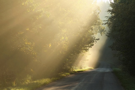 deciduous woodland: Rising sun falls on the road leading through the autumn woods