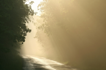 road autumnal: Rising sun shines on the road leading through the misty autumnal forest