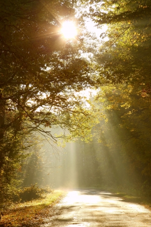 Morning sun shining between the trees and falls to the road in autumn woods