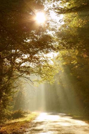 Ochtend zon schijnt tussen de bomen en valt op de weg in de herfst bos