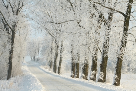 Country road leading among frosted trees on a sunny morning photo