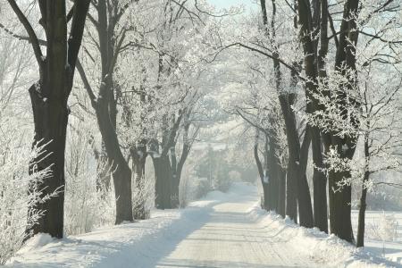 Invierno camino rural entre los �rboles de arce heladas en una ma�ana soleada