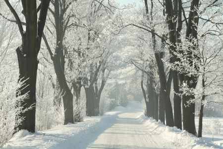 Winter landweg tussen de berijpte esdoorns op een zonnige ochtend