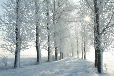 Landweg tussen de berijpte bomen op een zonnige ochtend Decembers