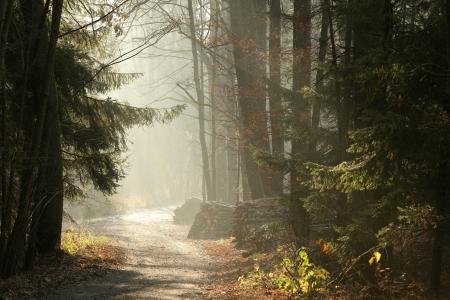 pfad: Country Road in den nebligen Sp�therbst Wald in der D�mmerung Lizenzfreie Bilder