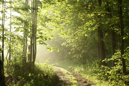 path ways: Forest path on a sunny May morning Stock Photo
