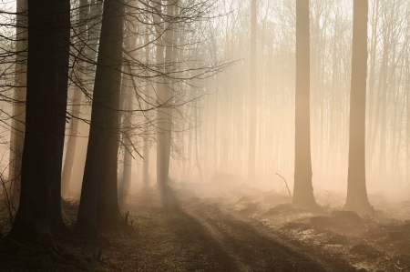 Dirt road leading through a misty forest at dawn