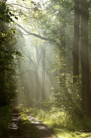 Dirt road through the forest in the rays of morning sun