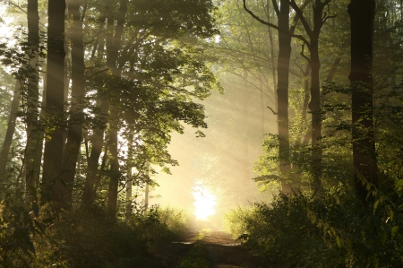 Dirt road leading through the woods on a foggy summer morning Stock Photo