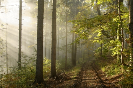 Lane leading through an enchanted forest in the rays of the rising sun Stock Photo - 15183223