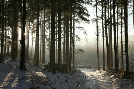 Camino que lleva a trav�s del bosque de con�feras invierno al atardecer Foto de archivo