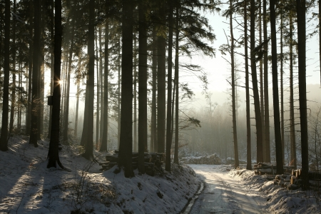 Path leading through the winter coniferous forest at dusk