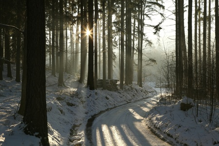 Path leading through the winter conifer forest in the direction of the setting sun Stock Photo