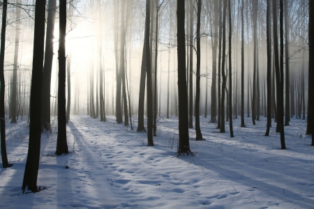 Misty winter woods at dawn   Photo taken in December Stock Photo - 15183204