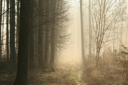 Dirt road leading through the early spring forest on a foggy morning Stock Photo - 15183200