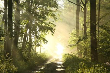 Pad door het voorjaar bos omgeven door weelderige groene esdoorn bladeren