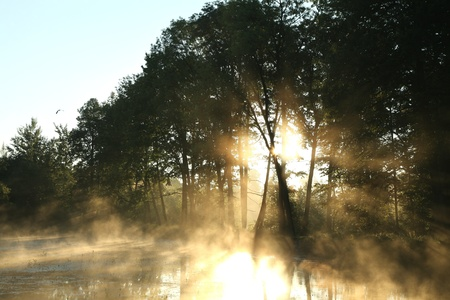 deciduous woodland: Morning sun enters the deciduous forest surrounded by mist floating over the water