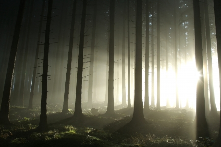 Coniferous forest illuminated by the morning sun on a foggy autumn day Stock Photo - 15205490
