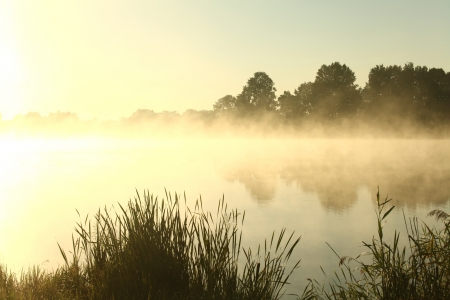 Summer morning on the edge of the lake