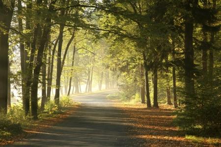 Bos weg in een mistige oktober ochtend Stockfoto