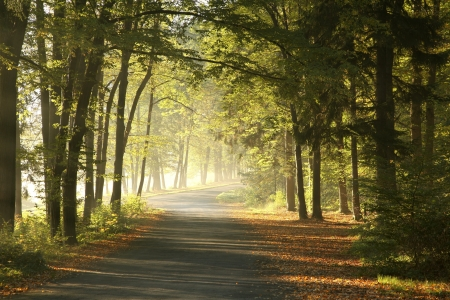 Forest road in a foggy October morning Standard-Bild