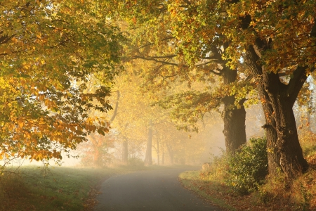 Rural road in a misty autumn morning photo